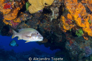 Master of the Reef, Cozumel Mexico by Alejandro Topete 